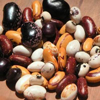 Prevention Of Cancer With Beans