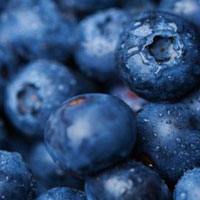 Can Blueberries Prevent Cancer?