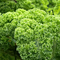 Kale - A Great Anti-Cancer Food
